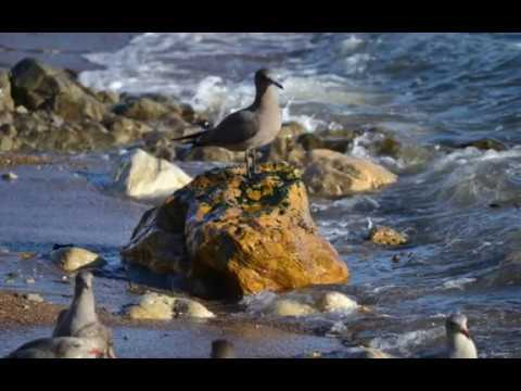 Sea Bird and Wildlife California Pacific Coast Photos Slideshow