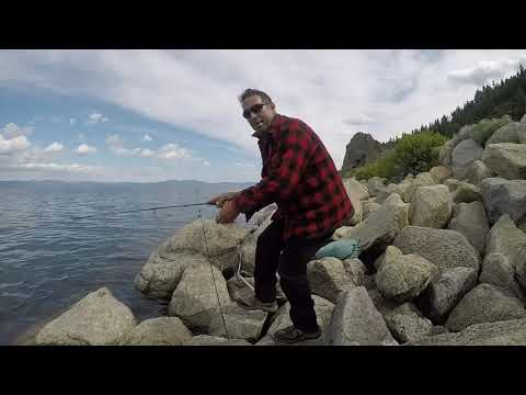 Solid Lake Tahoe Trout From The Nevada Shoreline