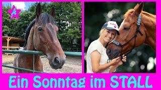 Stall FMA mit Kuscheln, Pflegen, Reiten & Füttern I APDATE I Pony Wochenende