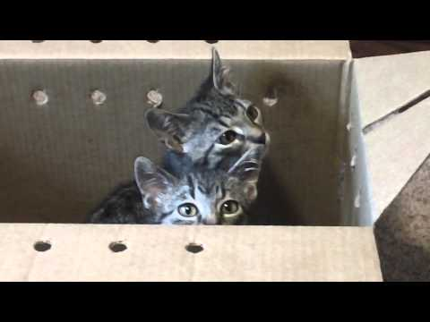 Day #1...Bringing home two baby kittens from the...Animal Rescue League.
