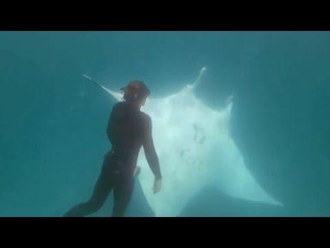 Вопрос: С какой скоростью плавает скат?
