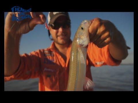 Pesca de pejerreyes en el Río de La Plata