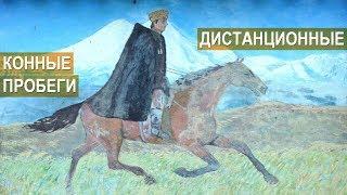 Оришев Залим. О дистанционных конных пробегах. Кабардино-Балкария