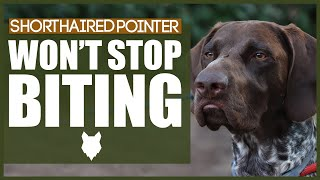 How To Stop Your GERMAN SHORTHAIRED POINTER BITING