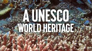 UNESCO: Protect the Great Barrier Reef, Not Coal!