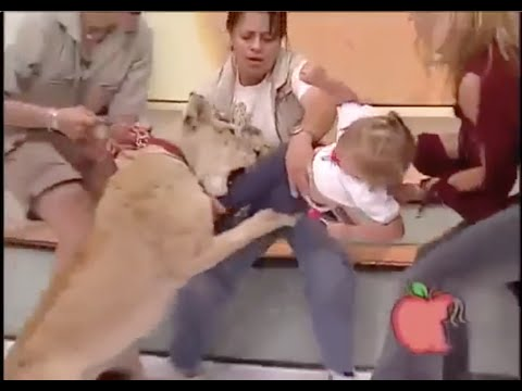 LION TRIES TO KILL BABY ON LIVE TV!