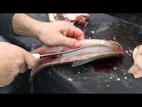 Cleaning Whitefish,professional Cleaned Whitefish,How To Clean A Whitefish,Filleting A Whitefish,