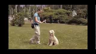 How To Train A Dog - Training Session Tips