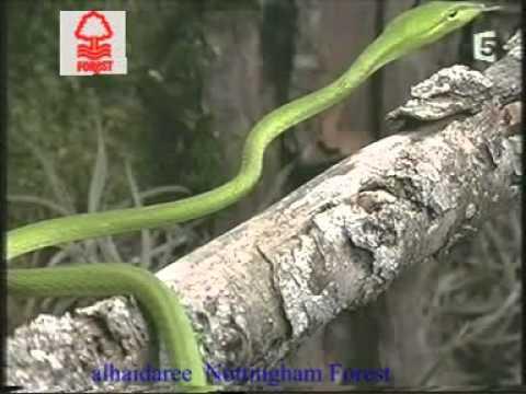 Snake In Eagle S Shadow Cat Vs Snake