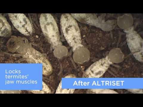 Termite Control - ALTRISET, the new benchmark in termite control