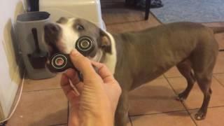 Dog vs Fidget Spinner