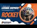 Reactive German Shepherd | 1 Year Old Rocket | Best German Shepherd Dog trainers