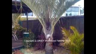 Davey Brushwood Fence Examples