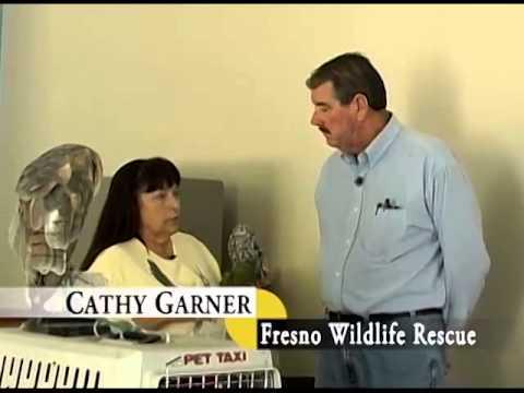 Fresno Wildlife