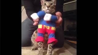 Приколы с котами- смешное видео