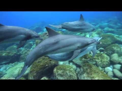 Дельфины поют