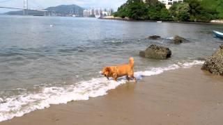 歡歡玩水玩得好開心^o^ thumbnail