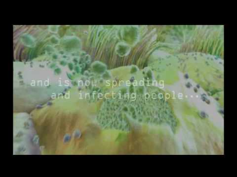 Lacto Pafi - Probiotic Supplement
