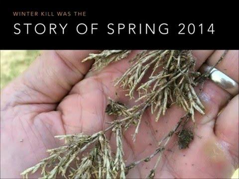 Webinar: Managing Broadleaf & Grassy Weeds In Warm-Season Turf