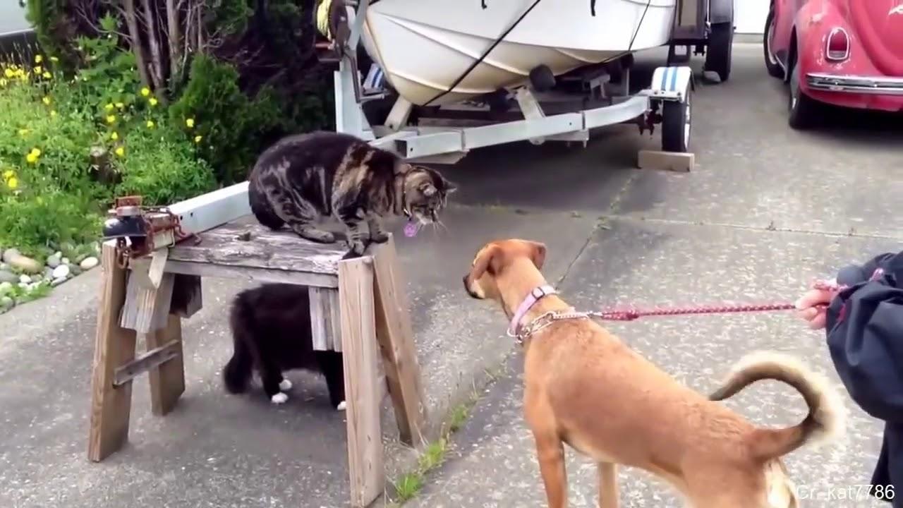 Faze comice animale... Cats v.s Dogs