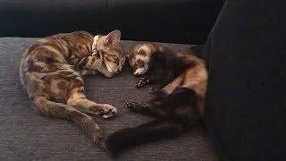 Смешные видео Приколы с Собаками и Кошками Домашние Животные  Калейдоскоп за 02 09 2018