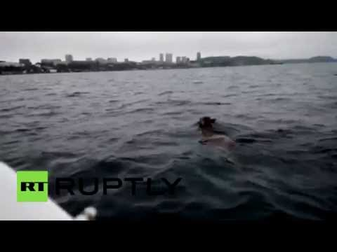 Meanwhile in Russia: Deer decides to swim to Vladivostok in Open Ocean