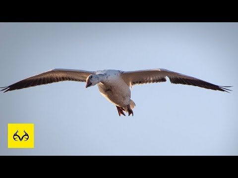 Best Tips For Snow Goose Hunting | You HAVE To Try These | The X Waterfowl