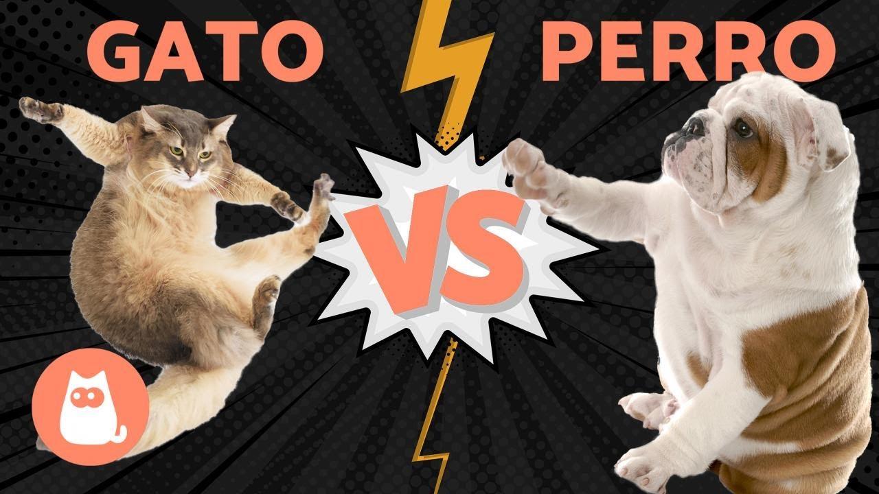 Perros Vs Gatos Quién Ganará Youtube