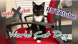 【RUTAtube!?】World Cat Day celebration with RUTA!/ルッタと世界猫の日のお祝い!