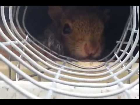 Squirrel One Way Tunnel | Repairs South Brunswick NJ 732-309-4209