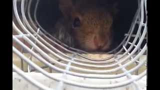 Squirrel One Way Tunnel | Repairs South Brunswick NJ 732-309-4209