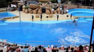 Шоу дельфинов в Marineland