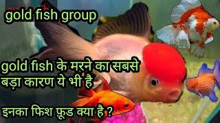 gold fish tank में कौन कौन सी मछली रखना चाहिए