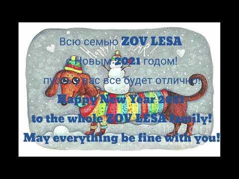 """с Новым годом семью """"ZOV LESA"""""""