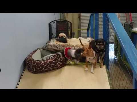 Dog Vlog #7