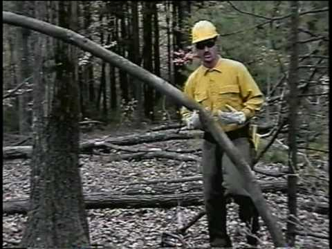 Wildland Fire Chain Saws - Part 1 - Spring Poles