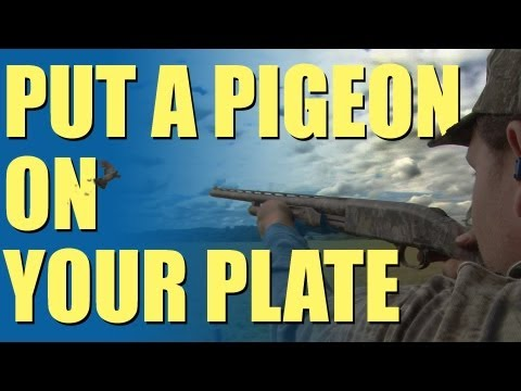 Fieldsports Britain - Pigeon shooting perfection + recipe (episode 192)