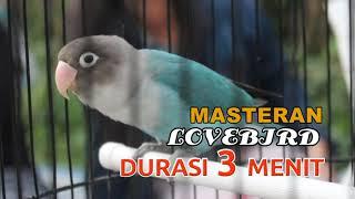 Download lagu MASTERAN LOVEBIRD 3 MENIT   DURASI 2 JAM