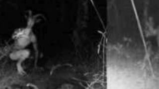 Mysterious creature seen in Odisha(India)(real)