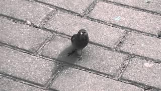 видео Жив! Цел! Орёл! (original)