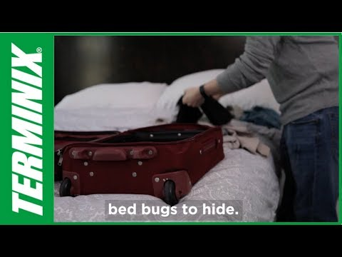 Protect Home From Bed Bugs - Bed Bugs & Hotels - Terminix