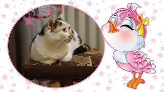 Реакция кошки на птиц/Видео для кошек/Кошка-орнитолог