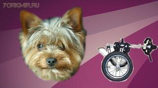 Паралич у собак | Симптомы | Лечение | Причины.