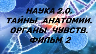 Наука 2.0. Тайны анатомии.  Органы чувств  Фильм 2.