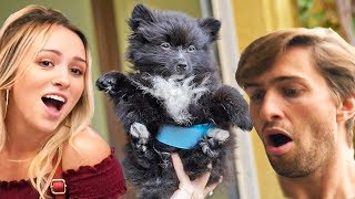TINY PUPPY PRESENT FOR MY GIRLFRIEND! #Reaction
