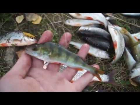 Рыбалка в Кушве - Верх. Тагил Разнорыбица на фидер