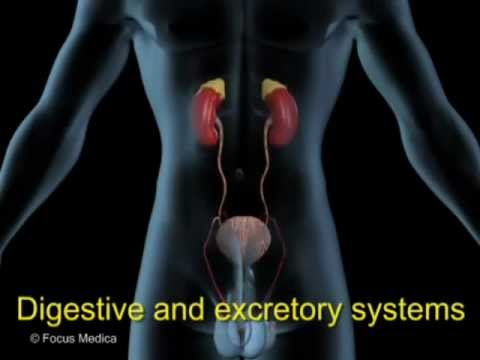 Animated Essential Atlas of Human Anatomy & Physiology - YouTube