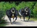 видео Google приобрёл разработчика военных роботов (новости) смотреть ролики