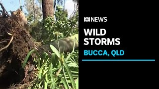 BOM investigating whether QLD storm may have been a tornado | ABC News