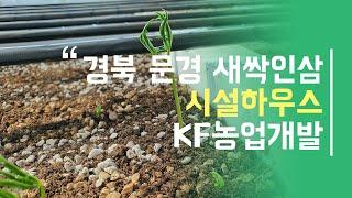 새싹인삼 양액기로 재배해볼까? (feat.KF-900)